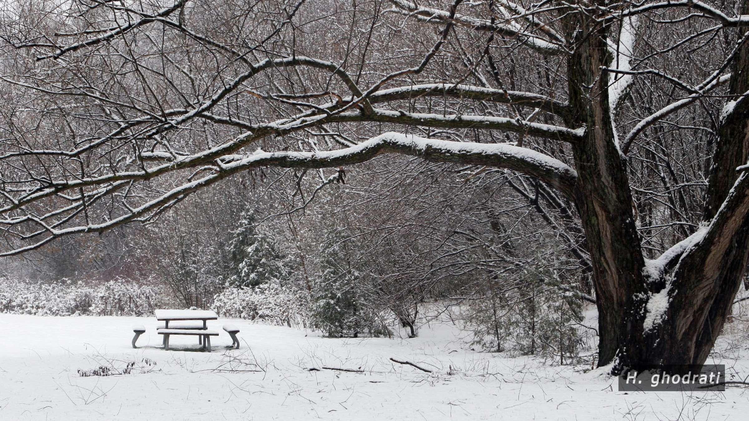 سری به پارکی در زمستان