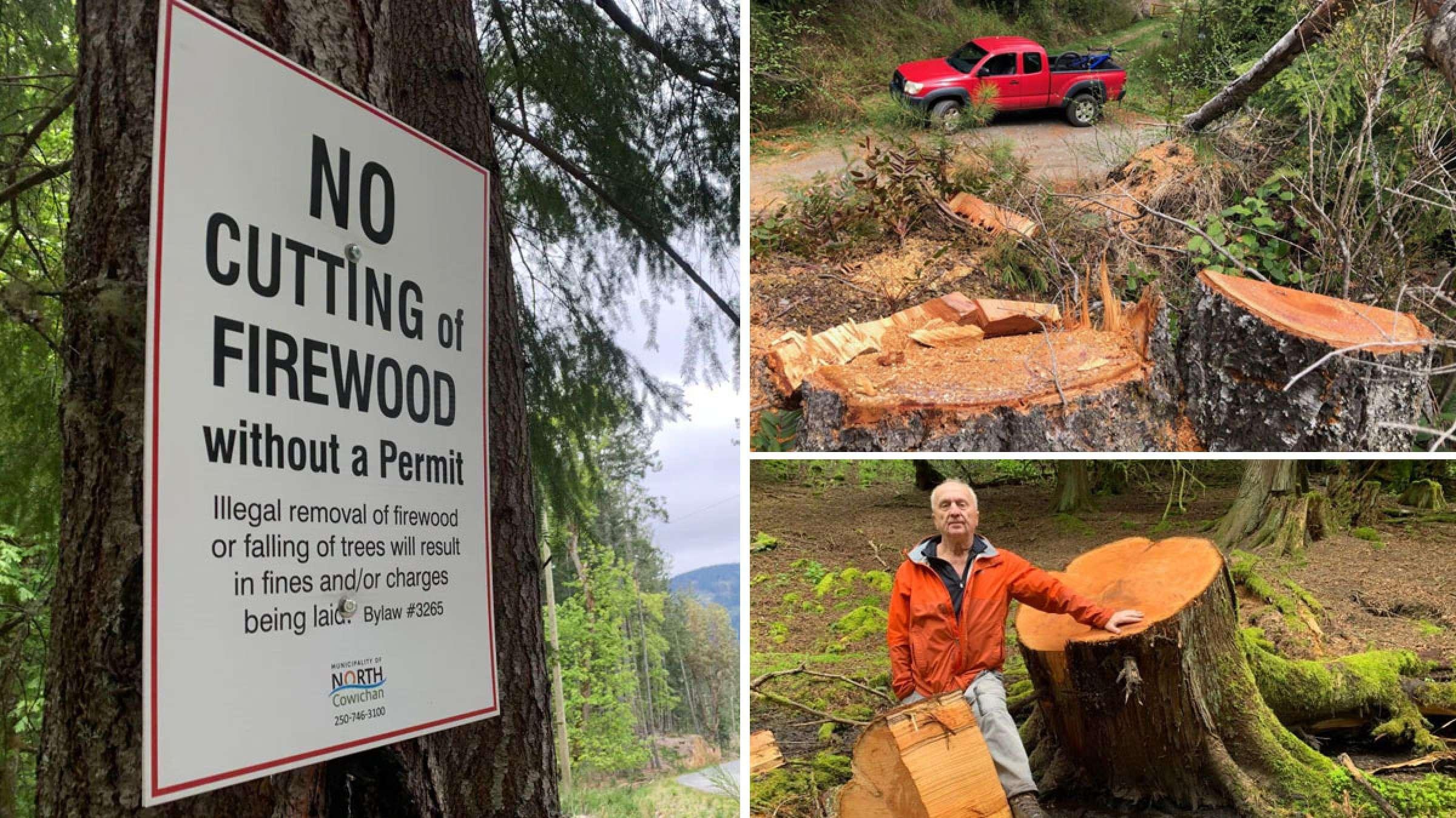 اخبار-محیط-زیست-آغاز-درخت-خواری-و-جنگل-دزدی-در-بریتیش-کلمبیا
