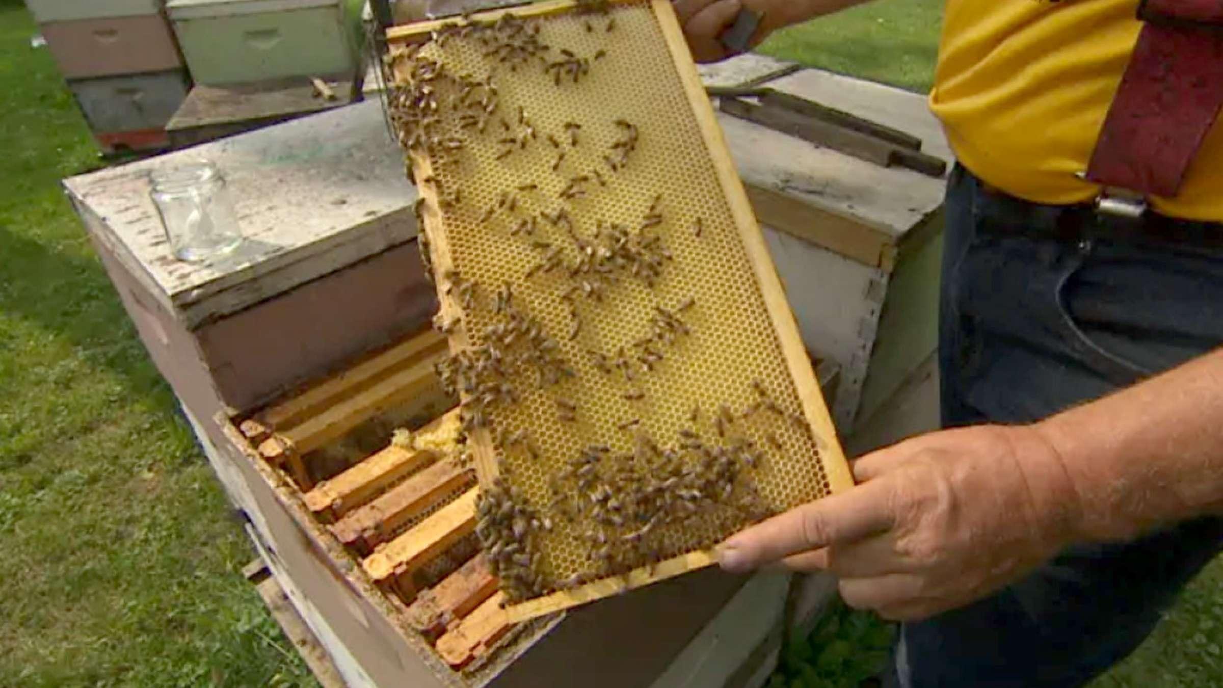 اخبار-کانادا-بازار-گرم-عسل-قلابی-بجای-عسل-خالص-در-کانادا