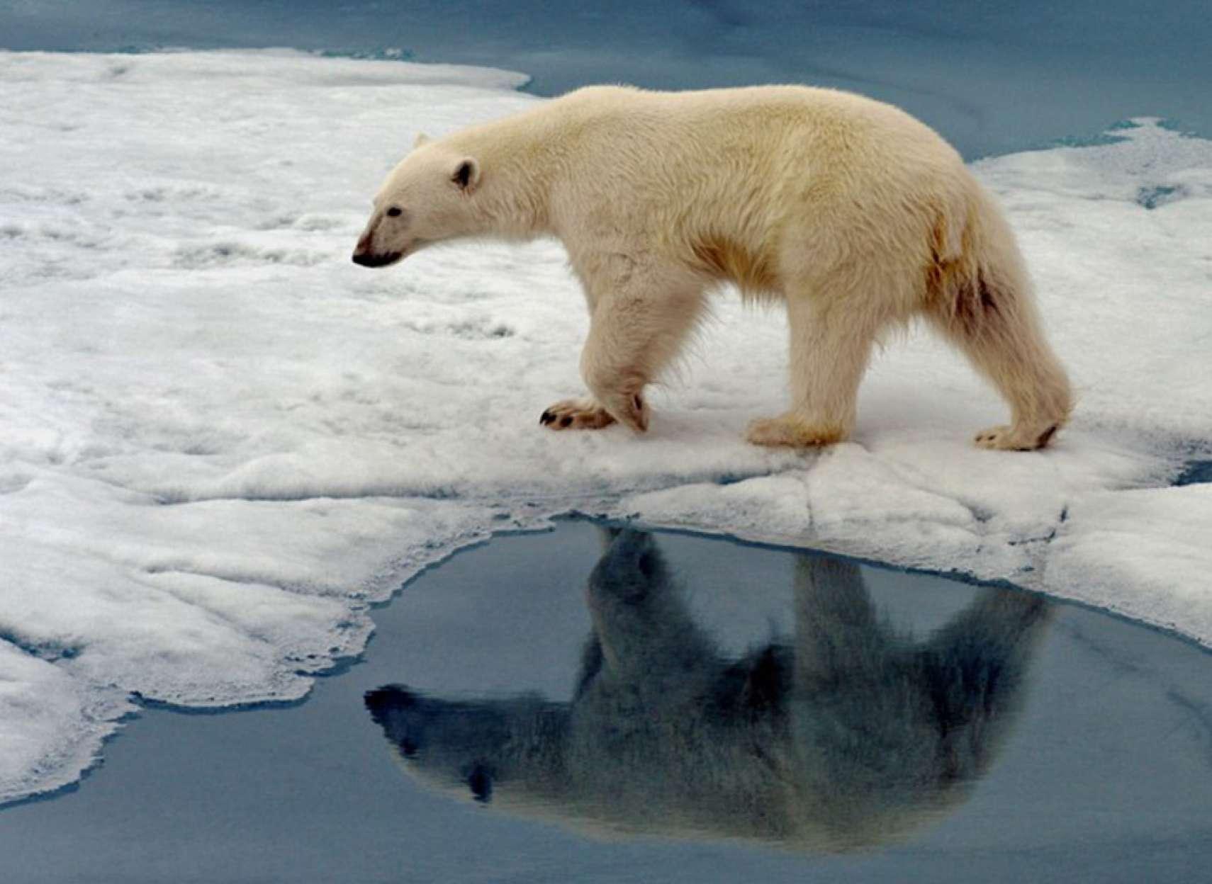 اخبار-کانادا-این-قرن-قطب-شمال-بدون-یخ-خواهد-بود