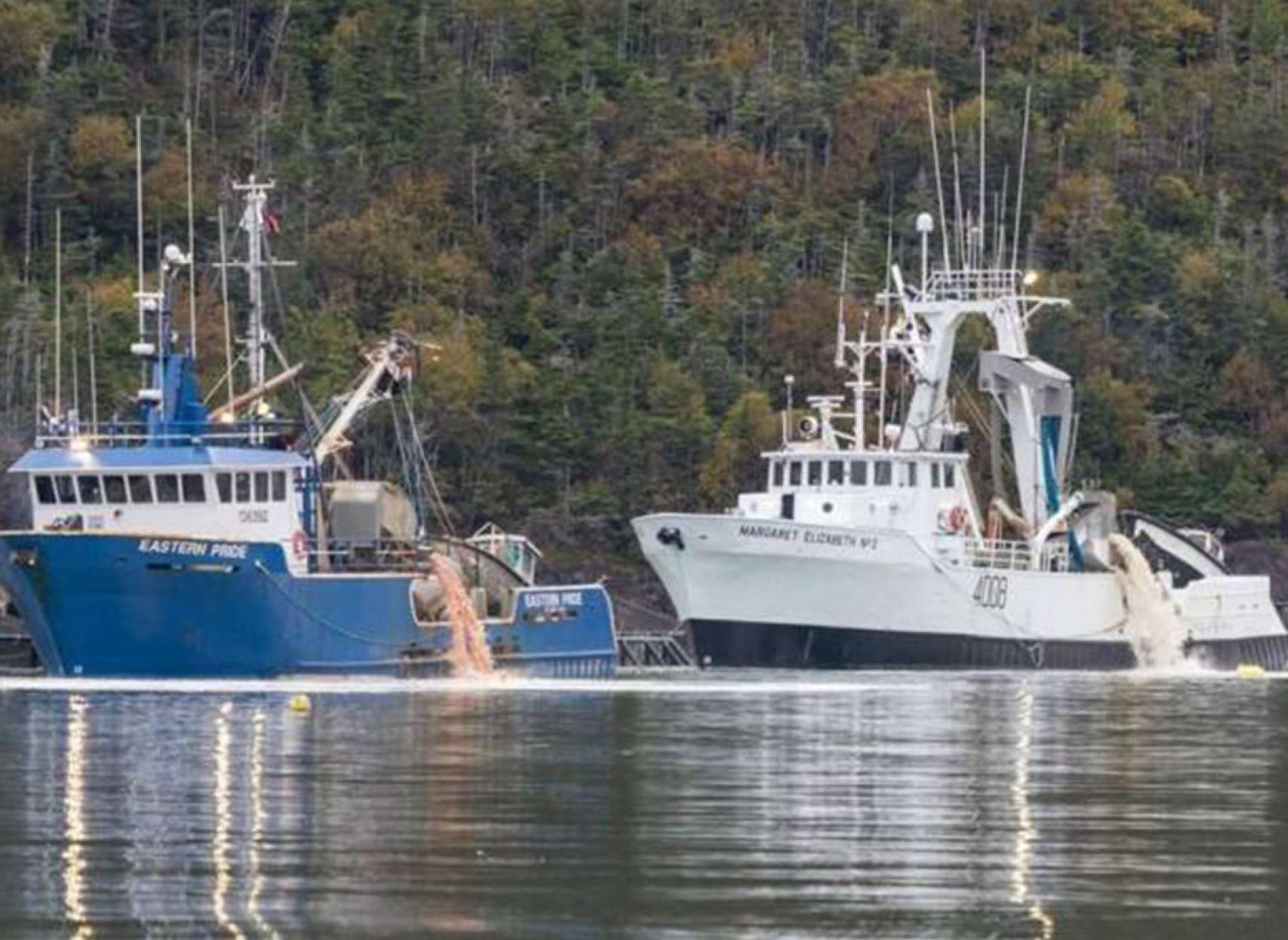اخبار-کانادا-دو-و-نیم-میلیون-ماهی-در-شرق-کانادا-مُردند