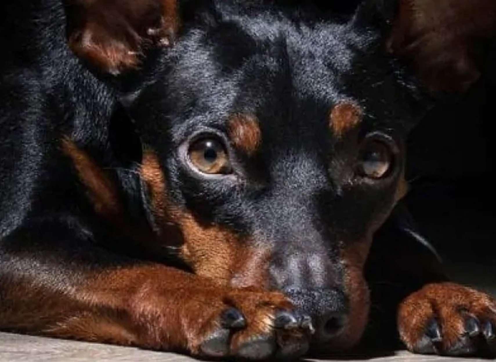 قانون-جدید-کانادا-برای-تحت-تعقیب-قرار-دادن-قساوت-نسبت-به-حیوانات-کانادا-اخبار