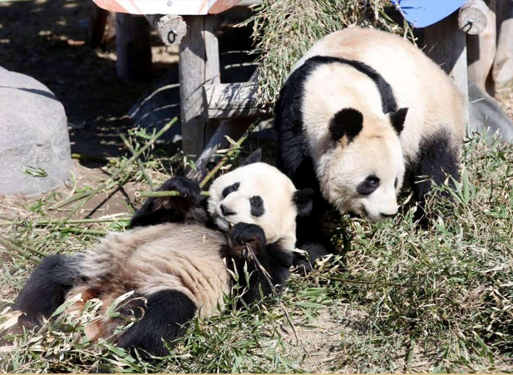 news-panda-toronto-calgary