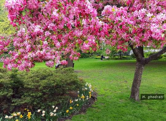 لذت بهار