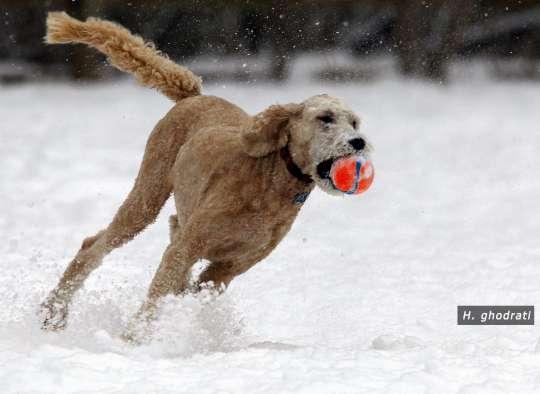 ghodrati-photo-ball-play-in-snow