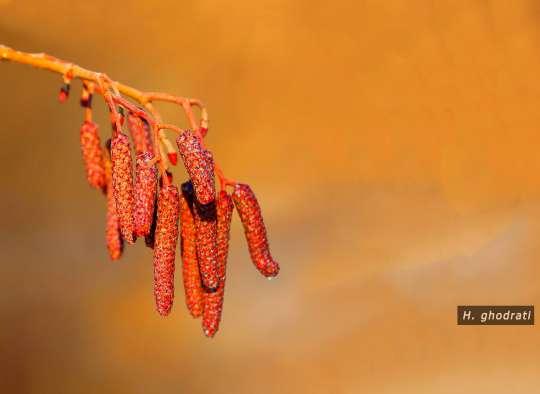 میوههای نارنجی