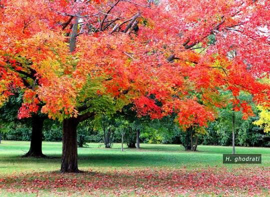 یادی از پاییز