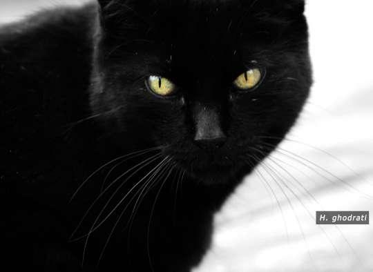 سیه گربه