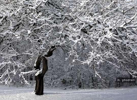 نشسته در برف
