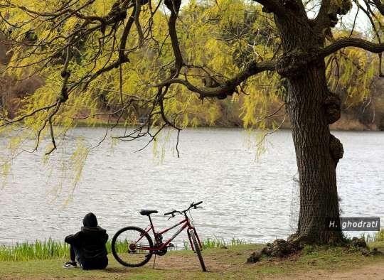 آب، درخت، دوچرخه، نشسته، بهار