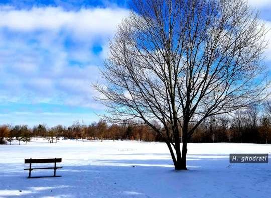 زمستان در پارک