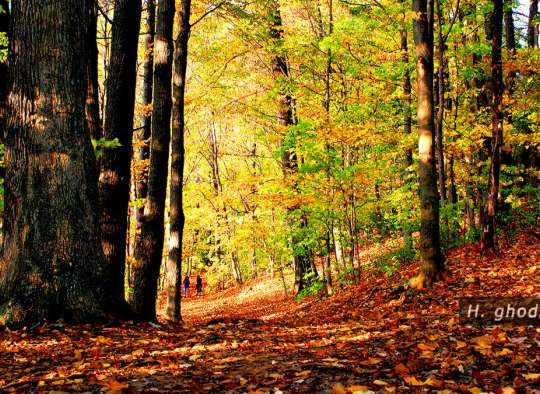 برگهای پائیزی کف زمین