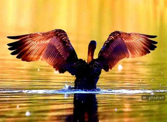 photo-ghodrati-taking-off